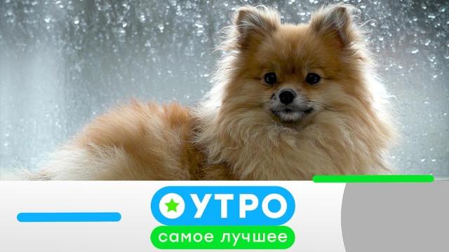 18 июня 2019 года.18 июня 2019 года.НТВ.Ru: новости, видео, программы телеканала НТВ