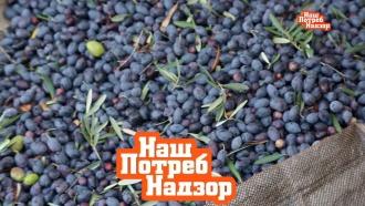 Символ Средиземноморья: как растут оливки