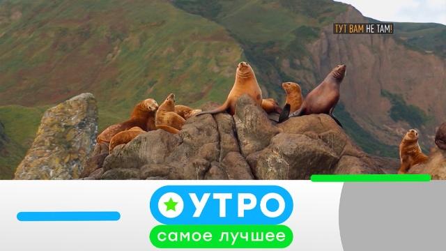 19июня 2019года.19июня 2019года.НТВ.Ru: новости, видео, программы телеканала НТВ