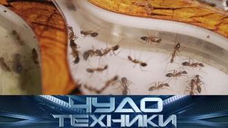 Живые «игрушки» вквартирах ипроверка чемоданов на прочность. «Чудо техники»— ввоскресенье на НТВ.гаджеты, насекомые.НТВ.Ru: новости, видео, программы телеканала НТВ