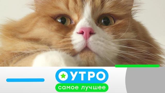 27июня 2019года.27июня 2019года.НТВ.Ru: новости, видео, программы телеканала НТВ