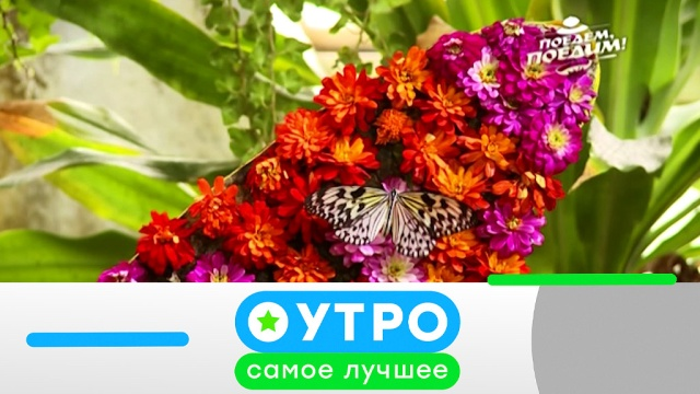 5 июля 2019 года.5 июля 2019 года.НТВ.Ru: новости, видео, программы телеканала НТВ