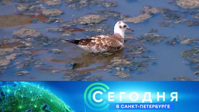 8 июля 2019 года. 19:20.8 июля 2019 года. 19:20.НТВ.Ru: новости, видео, программы телеканала НТВ