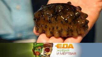 Рапаны, трепанги, гребешки: чем полезны моллюски из Приморья