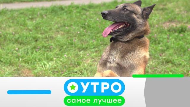 9 июля 2019 года.9 июля 2019 года.НТВ.Ru: новости, видео, программы телеканала НТВ