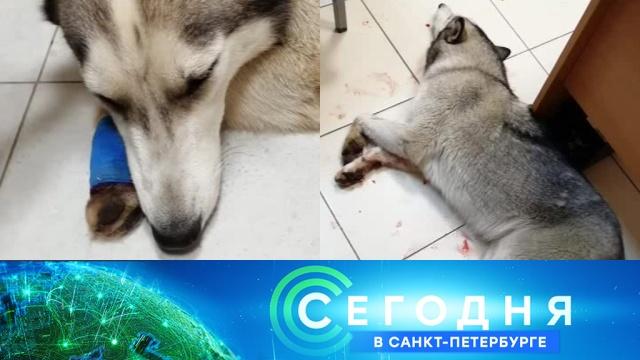 12 июля 2019 года. 16:15.12 июля 2019 года. 16:15.НТВ.Ru: новости, видео, программы телеканала НТВ
