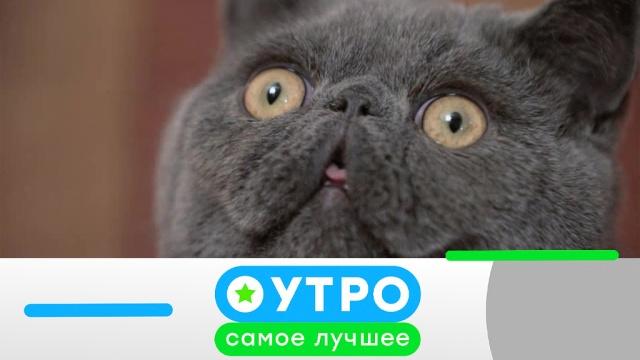 16 июля 2019 года.16 июля 2019 года.НТВ.Ru: новости, видео, программы телеканала НТВ