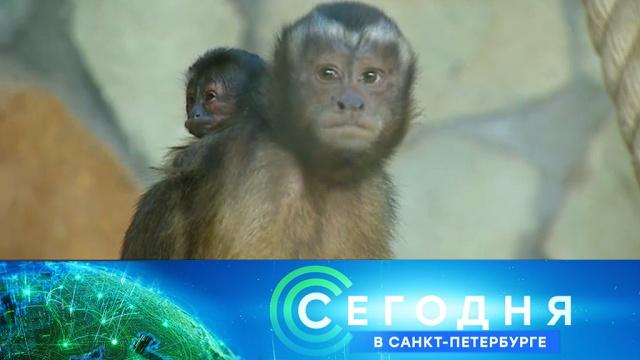 17 июля 2019 года. 16:15.17 июля 2019 года. 16:15.НТВ.Ru: новости, видео, программы телеканала НТВ
