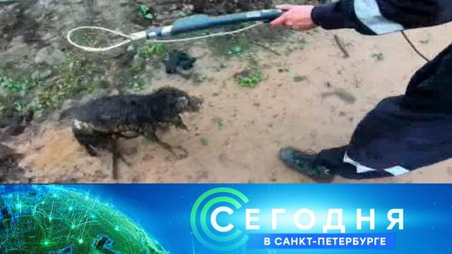 18 июля 2019 года. 19:20.18 июля 2019 года. 19:20.НТВ.Ru: новости, видео, программы телеканала НТВ