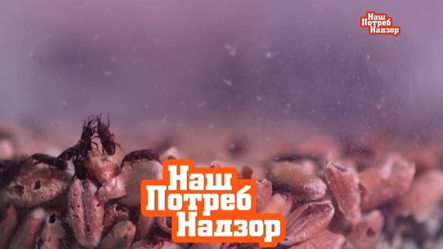 Дезинфекция иароматерапия: чистка кондиционера вавтомобиле.НТВ.Ru: новости, видео, программы телеканала НТВ