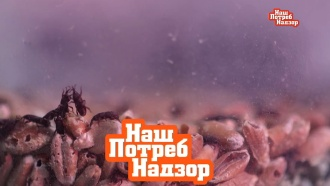 Нашествие жучков: почему зараженную крупу нельзя спасти
