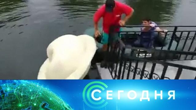 22 июля 2019 года. 16:00.22 июля 2019 года. 16:00.НТВ.Ru: новости, видео, программы телеканала НТВ