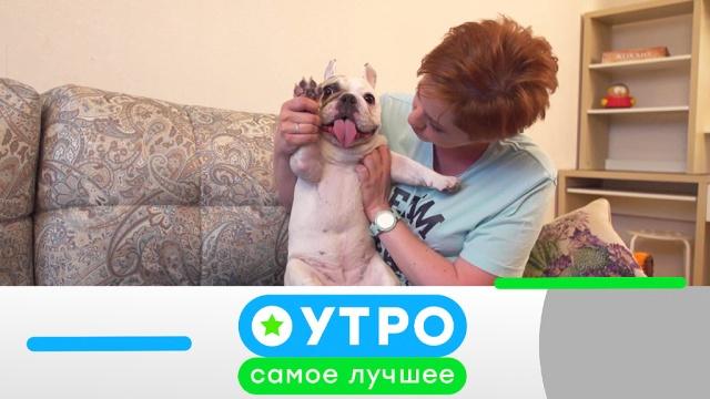 26июля 2019года.26июля 2019года.НТВ.Ru: новости, видео, программы телеканала НТВ
