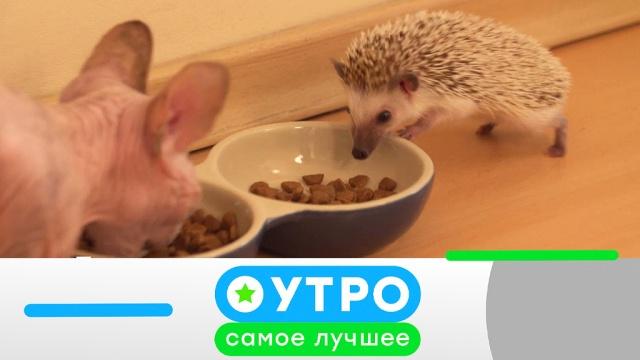 1 августа 2019 года.1 августа 2019 года.НТВ.Ru: новости, видео, программы телеканала НТВ