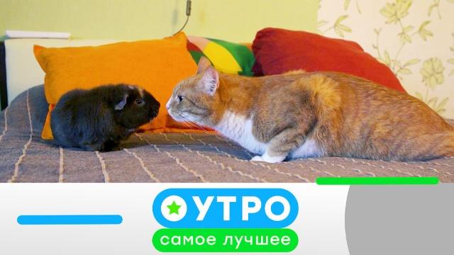 12 августа 2019года.12 августа 2019года.НТВ.Ru: новости, видео, программы телеканала НТВ