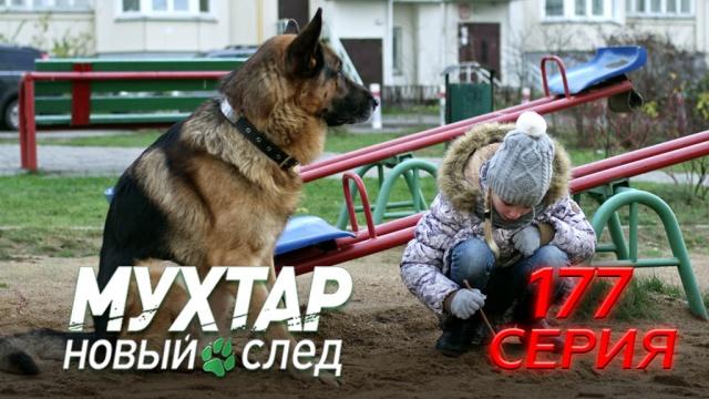 177-я серия.177-я серия.НТВ.Ru: новости, видео, программы телеканала НТВ