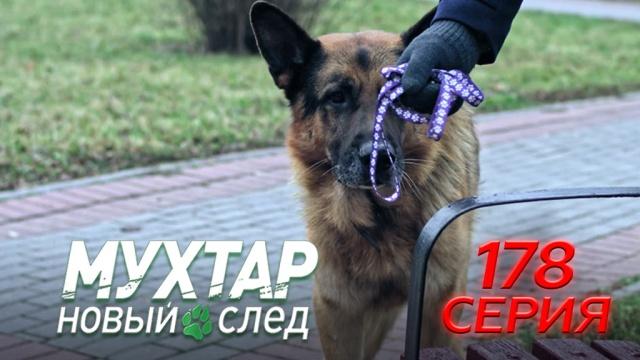 178-я серия.178-я серия.НТВ.Ru: новости, видео, программы телеканала НТВ