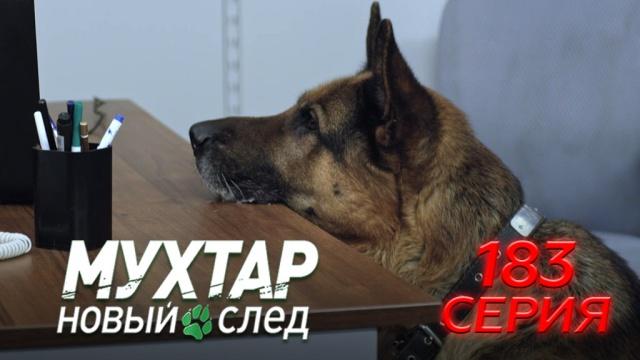 183-я серия.183-я серия.НТВ.Ru: новости, видео, программы телеканала НТВ