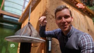 Душистый эксперимент: как защищаются от комаров втропиках