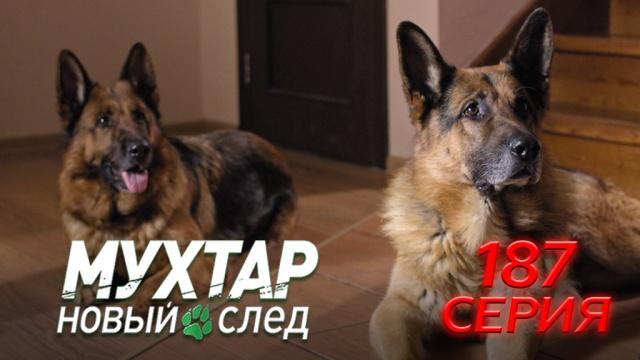 187-я серия.187-я серия.НТВ.Ru: новости, видео, программы телеканала НТВ