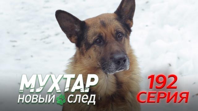 192-я серия.192-я серия.НТВ.Ru: новости, видео, программы телеканала НТВ