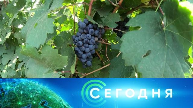 18 сентября 2019 года. 16:00.18 сентября 2019 года. 16:00.НТВ.Ru: новости, видео, программы телеканала НТВ