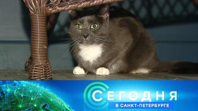 27 сентября 2019 года. 16:15.27 сентября 2019 года. 16:15.НТВ.Ru: новости, видео, программы телеканала НТВ