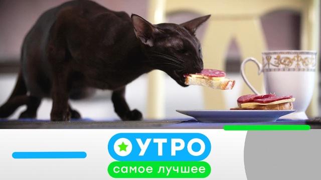 3октября 2019года.3октября 2019года.НТВ.Ru: новости, видео, программы телеканала НТВ