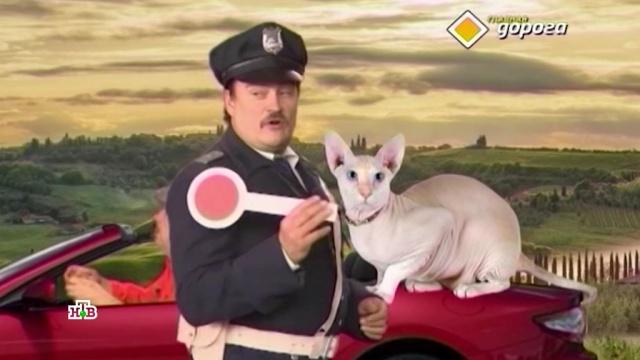 Правила перевозки животных вавтомобилях.НТВ.Ru: новости, видео, программы телеканала НТВ
