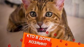 Выпуск шестьдесят шестой.Перевоспитание агрессивного котенка ибоязнь автомобилей у собак.НТВ.Ru: новости, видео, программы телеканала НТВ