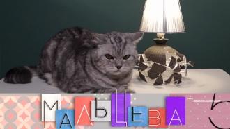 Выпуск от 21октября 2019года.Лампа из разбитой вазы иидеальный интерьер для маленькой кухни.НТВ.Ru: новости, видео, программы телеканала НТВ