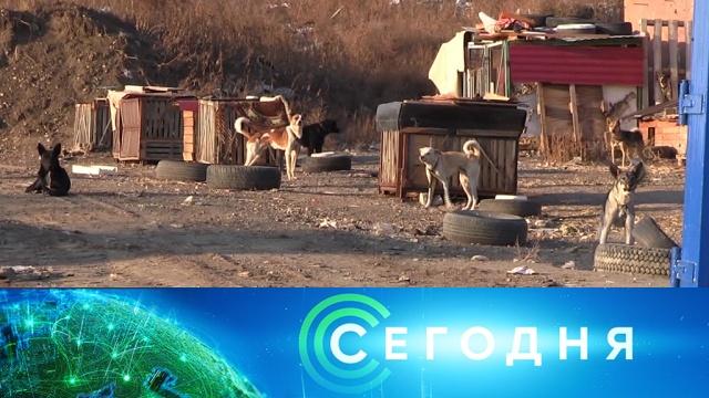 21 октября 2019 года. 13:00.21 октября 2019 года. 13:00.НТВ.Ru: новости, видео, программы телеканала НТВ