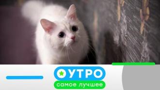 14 ноября 2019 года.14 ноября 2019 года.НТВ.Ru: новости, видео, программы телеканала НТВ