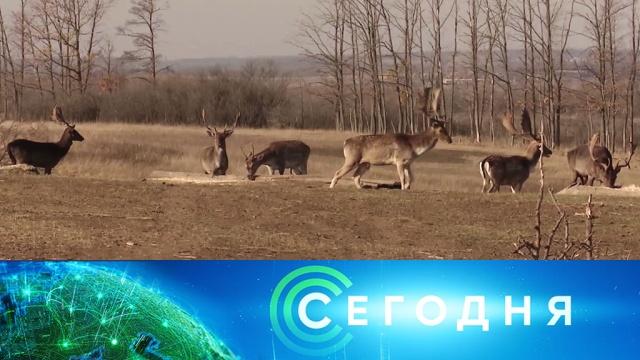 16 ноября 2019 года. 16:00.16 ноября 2019 года. 16:00.НТВ.Ru: новости, видео, программы телеканала НТВ