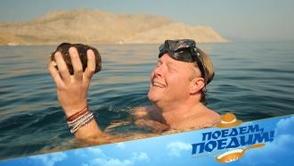 Джон Уоррен нырнет за губкой, соберет оливок инаучится танцевать танец пьяного грека. «Поедем, поедим!» вГреции— 30ноября