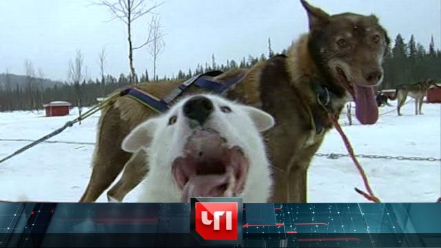 22 ноября 2019 года.22 ноября 2019 года.НТВ.Ru: новости, видео, программы телеканала НТВ