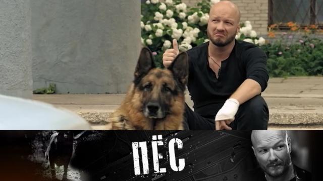 Никита Панфилов итот самый «Пёс»— по будням на НТВ.НТВ.Ru: новости, видео, программы телеканала НТВ