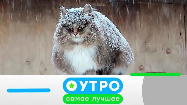 26ноября 2019года.26ноября 2019года.НТВ.Ru: новости, видео, программы телеканала НТВ