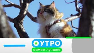 28ноября 2019года.28ноября 2019года.НТВ.Ru: новости, видео, программы телеканала НТВ