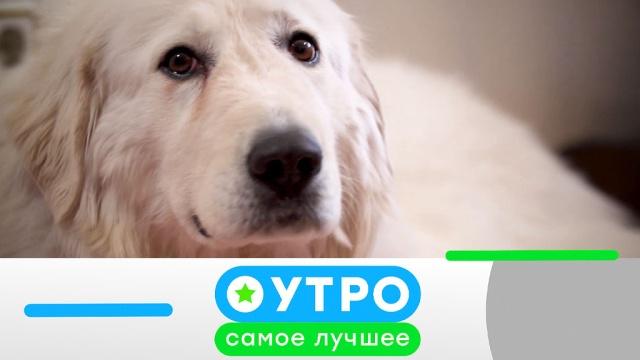 2 декабря 2019 года.2 декабря 2019 года.НТВ.Ru: новости, видео, программы телеканала НТВ