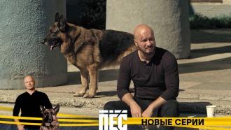 Никитан Панфилов иего «Пёс»— новый сезон любимого сериала— спонедельника в21:00на НТВ