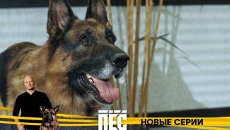 Любимые герои иновые серии детективного сериала «Пёс»— с9декабря в21:00