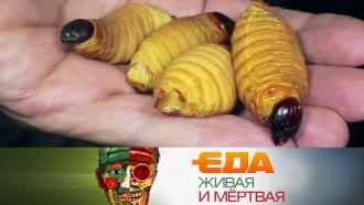 Выпуск от 7 декабря 2019 года.Насекомые как альтернативный источник белка, все опшенице ивыбор творога.НТВ.Ru: новости, видео, программы телеканала НТВ
