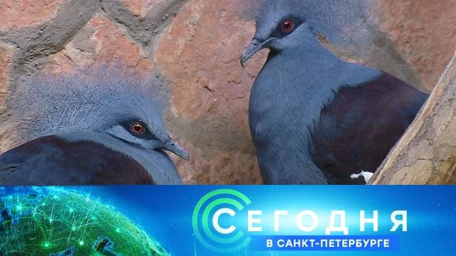 26 декабря 2019 года. 19:20.26 декабря 2019 года. 19:20.НТВ.Ru: новости, видео, программы телеканала НТВ