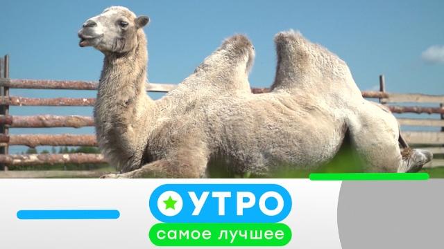 26 декабря 2019 года.26 декабря 2019 года.НТВ.Ru: новости, видео, программы телеканала НТВ