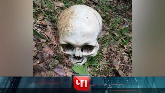27 октября 2020 года.27 октября 2020 года.НТВ.Ru: новости, видео, программы телеканала НТВ