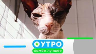 29октября 2020года.29октября 2020года.НТВ.Ru: новости, видео, программы телеканала НТВ