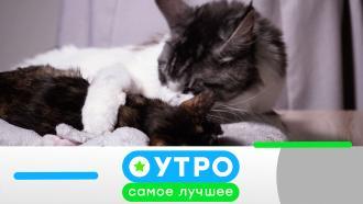 6 ноября 2020 года.6 ноября 2020 года.НТВ.Ru: новости, видео, программы телеканала НТВ