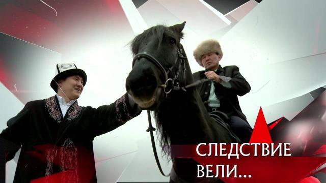 Выпуск от 29ноября 2020года.«Из породы убийц».НТВ.Ru: новости, видео, программы телеканала НТВ