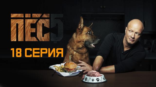 «Пёс». Все сезоны, все серии.НТВ.Ru: новости, видео, программы телеканала НТВ